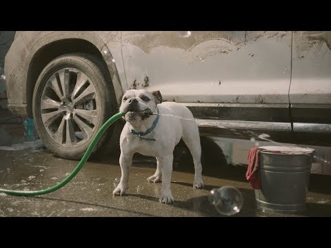 Interesting funny commercial dog car wash subaru youtube Subaru Dog Car Wash Commercial 2020 Redesigns and Concept