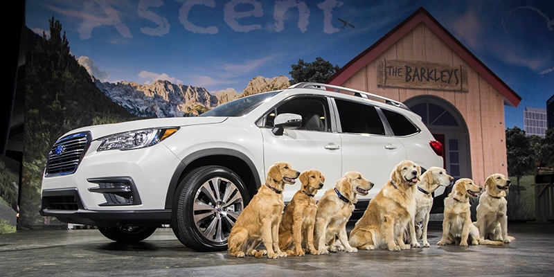 New subaru looks to dogs to drives its marketing campaign Subaru Dog Car Wash Commercial 2020 Interior