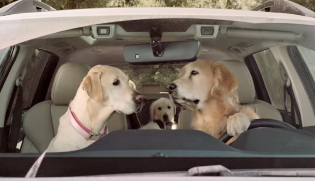 New video subaru commercial barkleys getting a car wash Subaru Dog Car Wash Commercial 2020 Price and Review